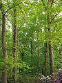 Flickr - Nicholas T - Graver Arboretum (3).jpg