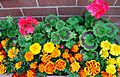 Flickr - ronsaunders47 - TROUGH OF BLOOMS .1.jpg