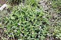 Flora of Yercaud 0046.jpg