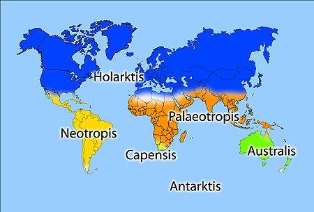 таблица флористические царства