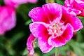 Flower-106.jpg