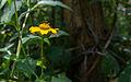 Flower in Margarita Island.jpg