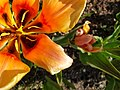 Flower photography - Photo by Giovanni Ussi 10.jpg