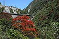 Flowering Rata at the base of the Otira Viaduct - panoramio.jpg
