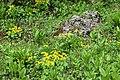 Flowers of Jablanica Mountain, Struga 05.jpg