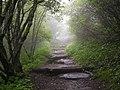 Foggy Fiefdom - Flickr - monsieuricon.jpg