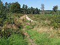 Footpath on Cannock Chase Near Slitting Mill - geograph.org.uk - 244933.jpg
