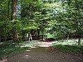Footpath through Pasture Wood, near Abinger Common - geograph.org.uk - 1285513.jpg