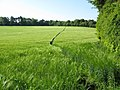 Footpath through the barley - geograph.org.uk - 1327768.jpg