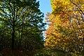Forêt de Rambouillet — automne 2018 (10).jpg