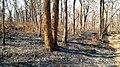 Forest Fire @ Wayanad Wildlife Sanctuary, Muthanga Range - panoramio (17).jpg