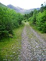 Forest Track in Glen Nevis - geograph.org.uk - 491237.jpg