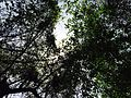Forest canopy.jpg