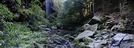 Rainforest in the Blue Mountains, Australia Forest in the bluemountains.jpg