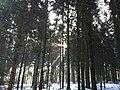 Forest near Langenthal, Zankhölzli - panoramio.jpg