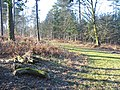Forest track near Bolderwood, New Forest, Hampshire. - geograph.org.uk - 391506.jpg