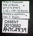 Formica aquilonia casent0010682 label 1.jpg