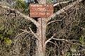 Fotografía denuncia, «Prohibido tirar escombros» - Pero mientras tanto el pobre pino se va a bañar en óxido durante un tiempo - panoramio.jpg