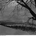 Fotothek df ps 0001848 Bäume ^ Landschaften ^ Hügellandschaften - Gebirgslandsch.jpg