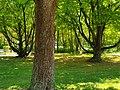 Frühling Grün.jpg
