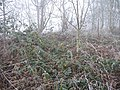Frosted brambles - geograph.org.uk - 640790.jpg