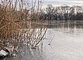 Frozen lake in Prospect Park (20385).jpg