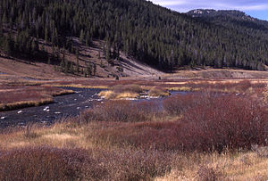 Gallatin River in Yellowstone National Park 1997