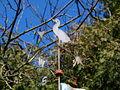Garden P3231336.JPG