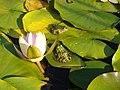 Garden pond biotope 1.JPG