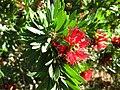 Gardenology.org-IMG 2059 hunt09oct.jpg
