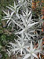 Gardenology.org-IMG 2731 rbgs11jan.jpg