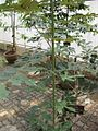 Gardenology.org-IMG 8140 qsbg11mar.jpg