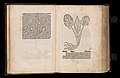 Gart der gesuntheit - Ortus sanitatis (Herbarius) MET DP358432.jpg