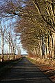 Geograph-313723-Anne Burgess-Beech Trees in Crimond.jpg