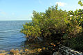 Gfp-florida-biscayne-national-park-tree-on-shore.jpg