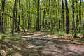 Gfp-michigan-mount-arvon-forest-at-the-top.jpg