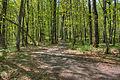 Gfp-michigan-mount-arvon-forest-at-the-top.jpg