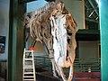 Giganotosauro Creta 02.jpg