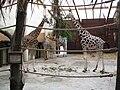 Giraffen 2089.jpg