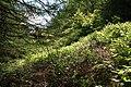 Glenariff Forest - geograph.org.uk - 454153.jpg