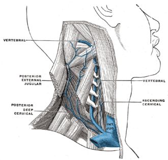 Suboccipital triangle - Image: Gray 563