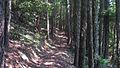Grayback Mountain (15824457452).jpg