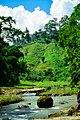 Green Beautiful Bangladesh.jpg