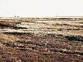 Green Hill (2) - geograph.org.uk - 1057698.jpg