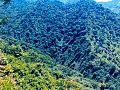 Green Hills - panoramio.jpg