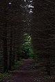 Green light in Voronezh forest.jpg