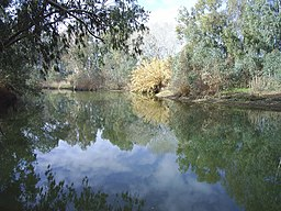 none  Guadiamar nær Sanlúcar la Mayor