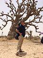 Guitarist under baobab in Senegal.jpg