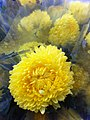 HK CWB 維園年宵市場 Victoria Park Fair - flowers yellow ball Jan-2012 Ip4.jpg