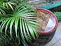 HK Sheung Wan Lok Ku Road rain red 木桶 Wooden barrel green leaf June-2012.JPG